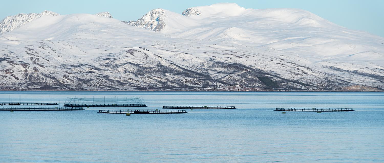 Merder I Sjoen Ved Snødekte Fjell Stingray Maritime Solutions Kundehistorie Erfaringer Xledger
